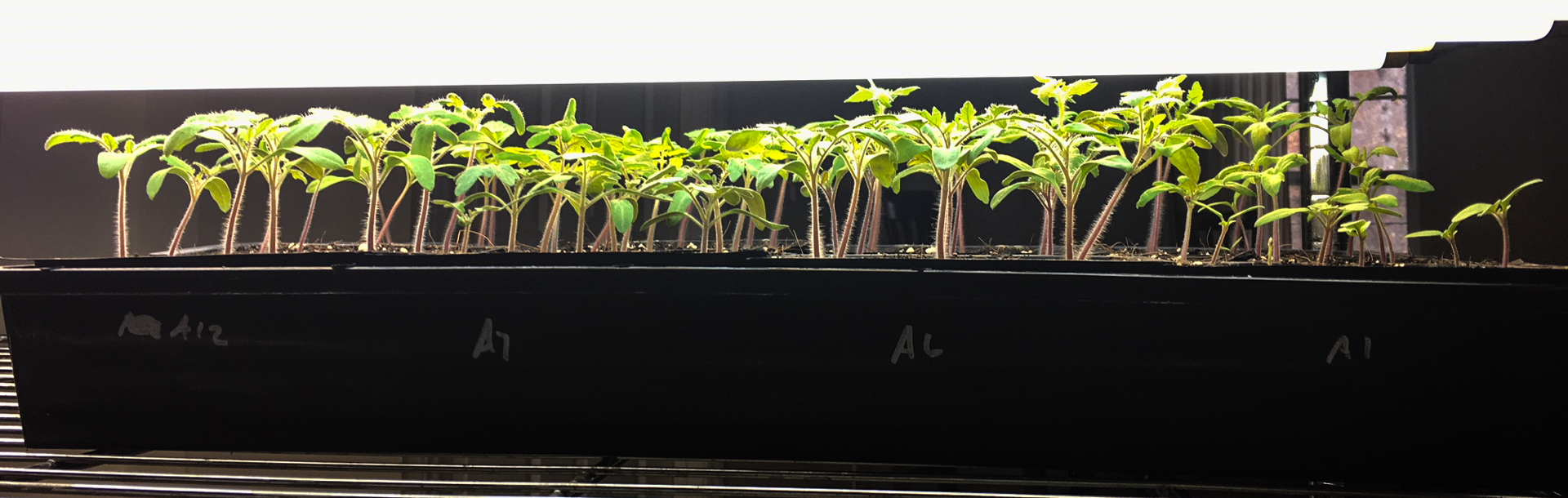 DIY grow lights: easily grow garden seedlings, microgreens, and more thumbnail