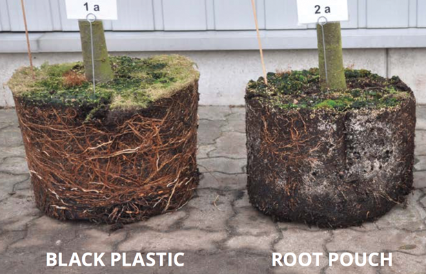 A picture says a thousand words. Here's an image from Root Pouch's website showing how roots grow in a traditional pot (left) versus a root pouch pot (right). Notice no wrapping and the air-pruned roots on the right.